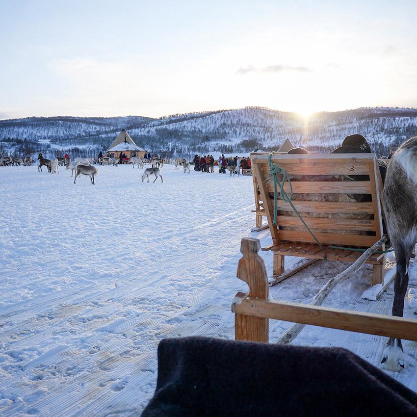 Rentierschlittenfahrt Tromsø